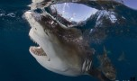 """""""Give Sharks A Chance"""", support this unique research project!!"""