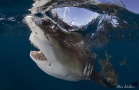 """Give Sharks A Chance"", support this unique research project!!"